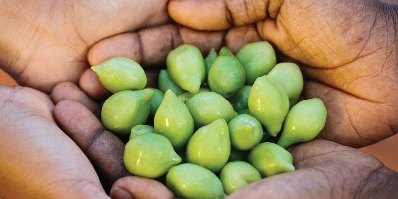 Kakadu Plum Seed Oil Benefits for Skin